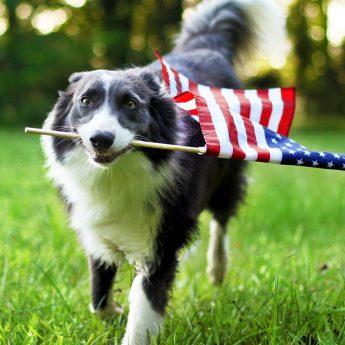 Best Made in the USA Dog Toys