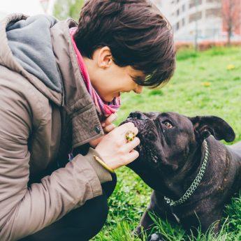 affordable-dog-training