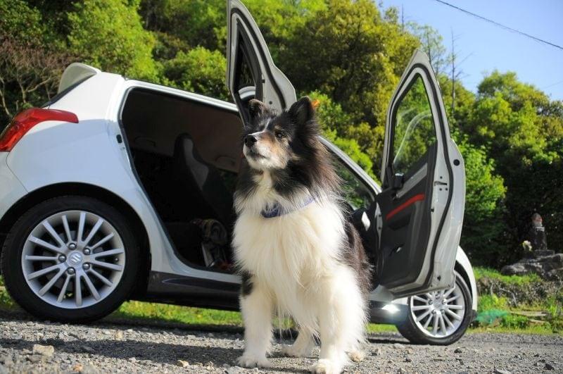 car trip with pet dog