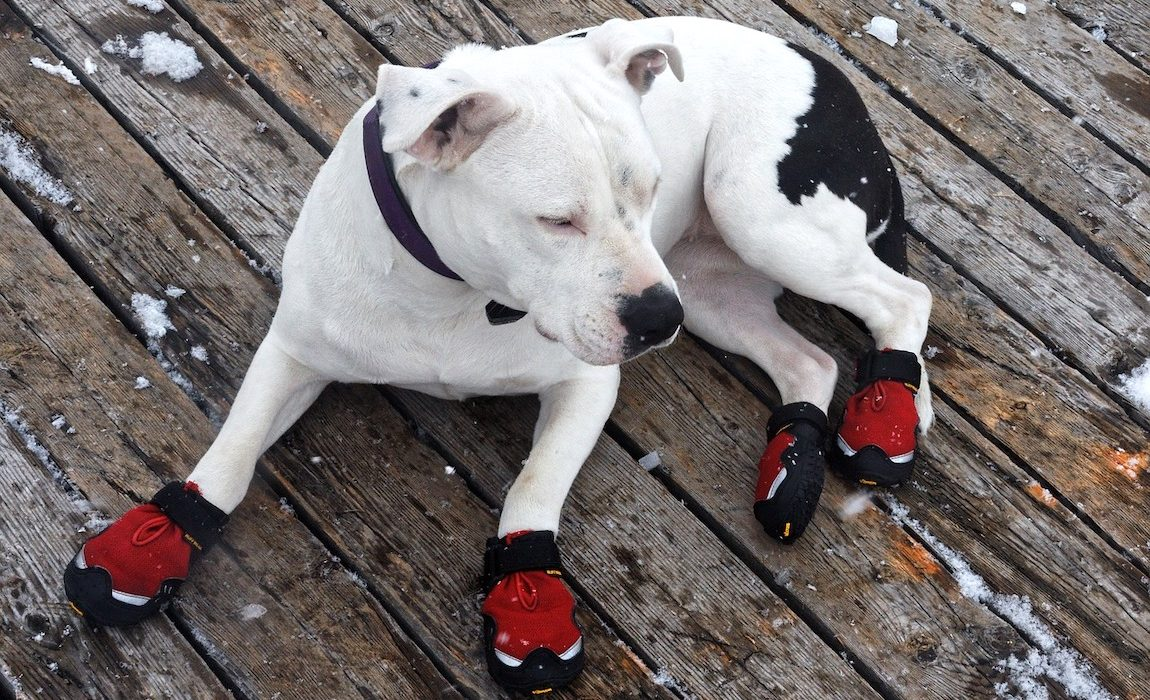 11 Diy Dog Bootie Plans Homemade Paw Protectors