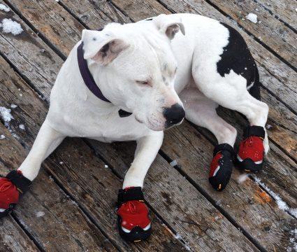 diy-dog-booties