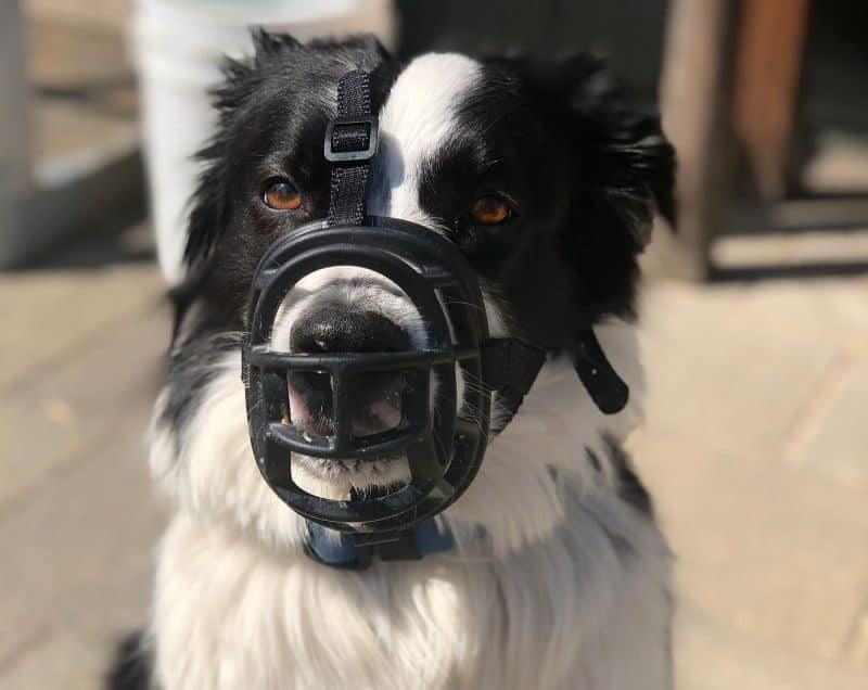 DIY dog muzzle