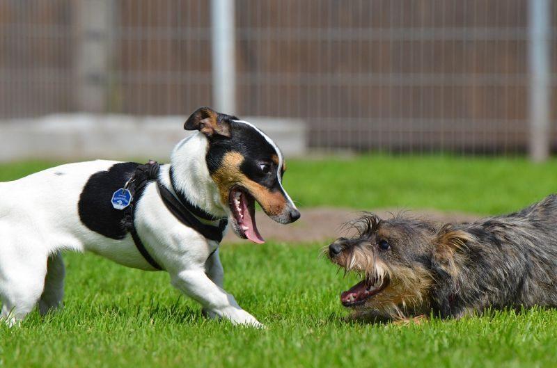 dog park for exercise