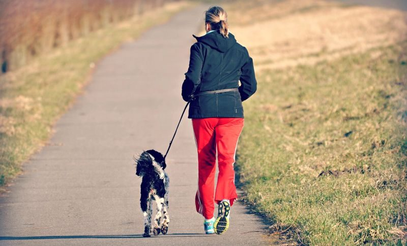 dog walk exercise