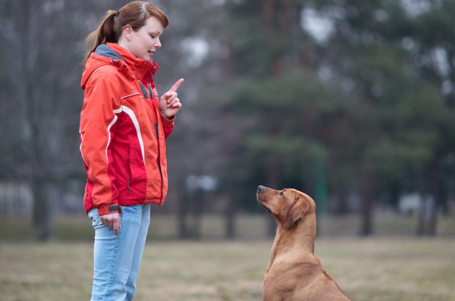 Dog Boot Camps: Are They Helpful or Harmful?