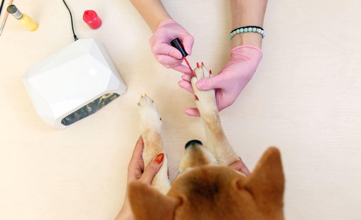 nail polish for dogs