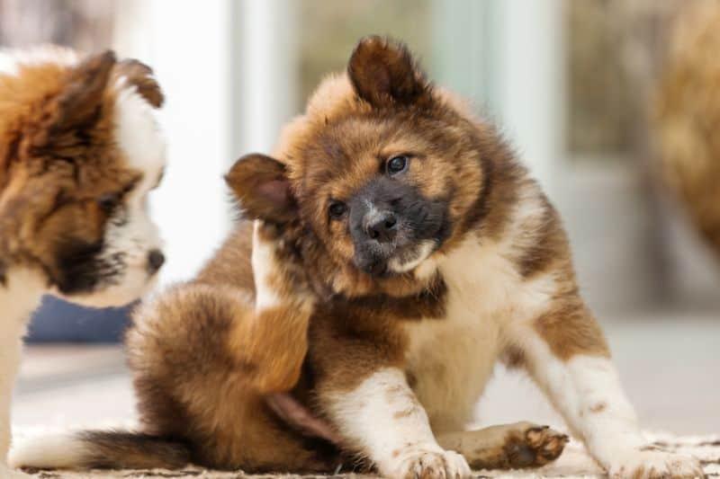 Dog Shampoo for Itchy Skin
