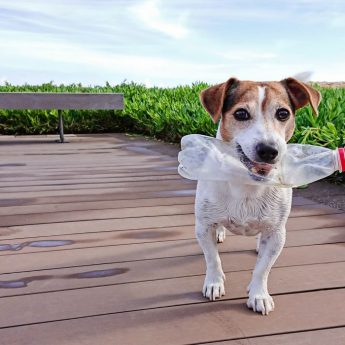 Water Bottle Toys for Dogs