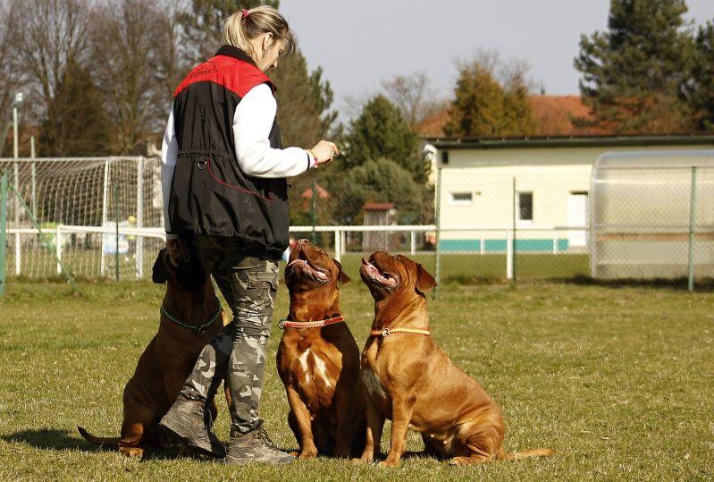 Dog Boot Camp