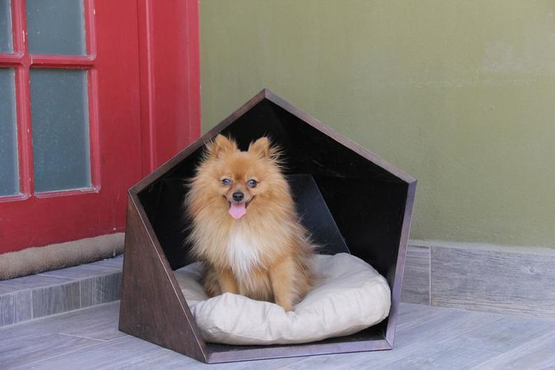 Wooden Dog House Bed