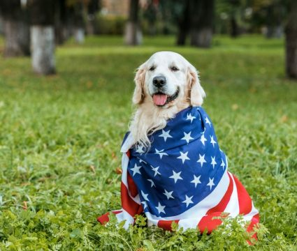 Made in the USA dog treats