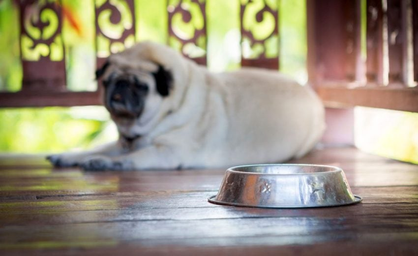 Stainless Steel Water Bowl for Dogs