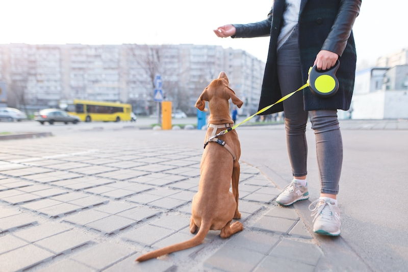 dog bootcamp training