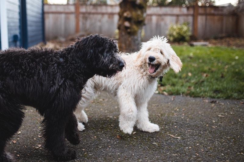 dog send away training