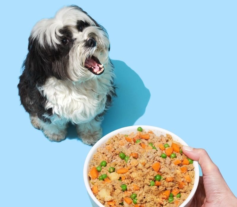 made to order dog food
