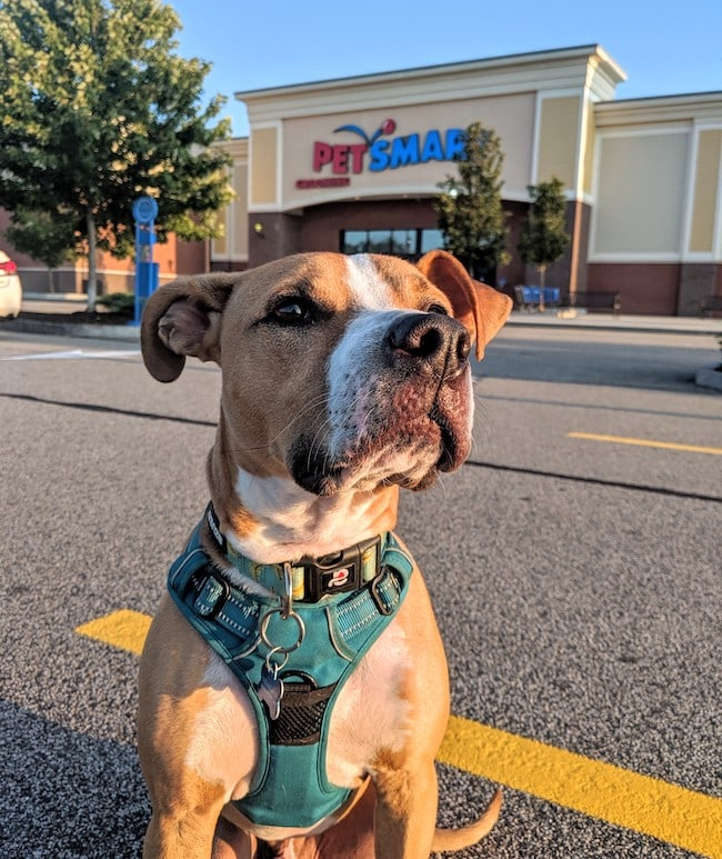 PetSmart dog training class review