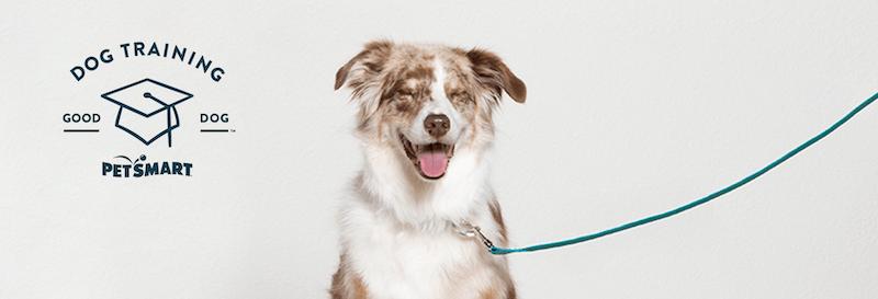 petsmart puppy training