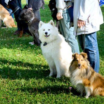 petsmart training review