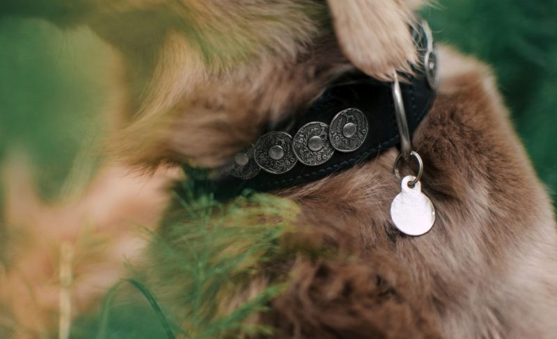 Fit your dog with an ID tag