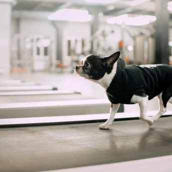 Canine Exercise Equipment