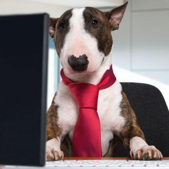 make resume for your dog