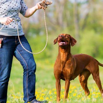 Flirt Poles for Dogs