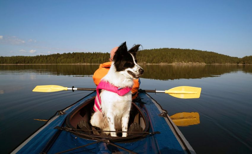 5 Best Kayaks for Dogs [2020 Reviews]