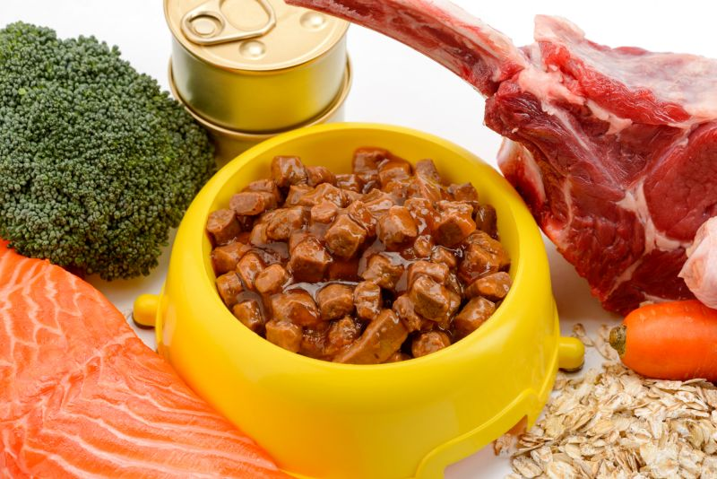 canned foods for dogs
