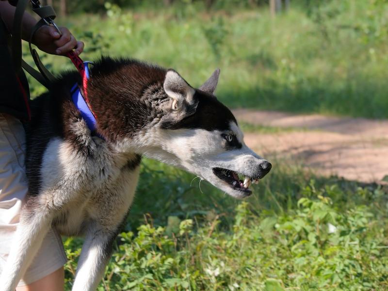 Walking reactive dogs