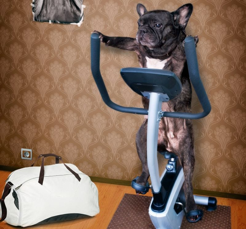 exercise equipment for dogs