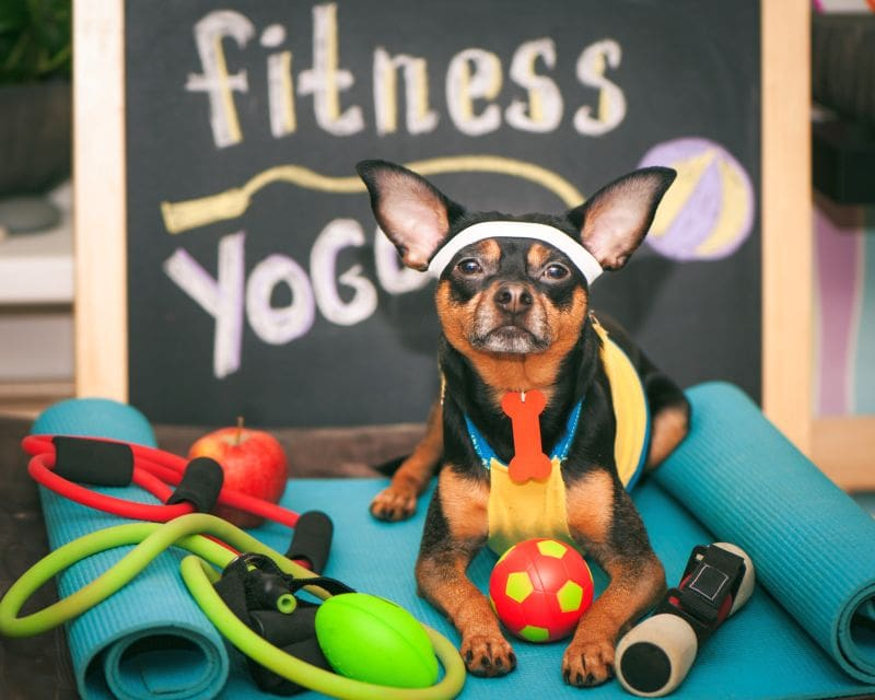 Exercise toys for dogs