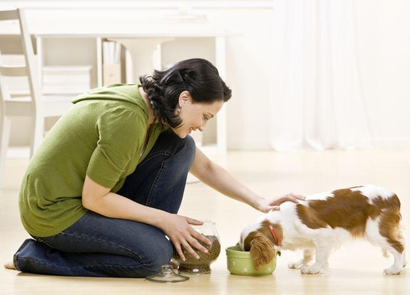 Picking best wet food for dogs