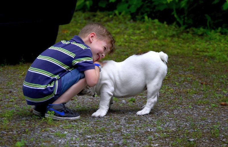 small dogs who love kids