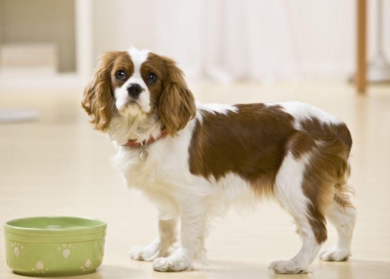 Best ceramic dog bowl