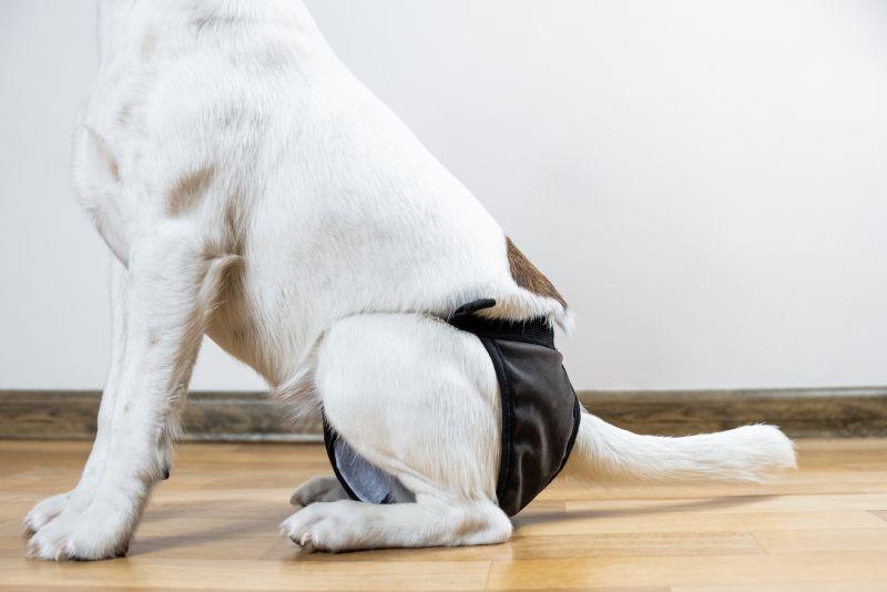 Homemade dog diaper
