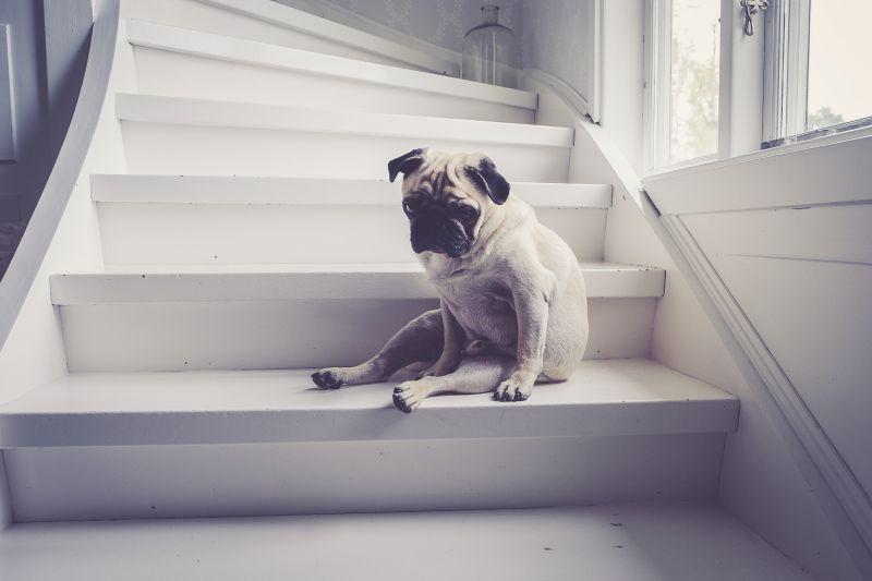 dog stair running routine