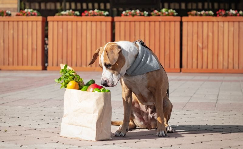 fresh food for dogs
