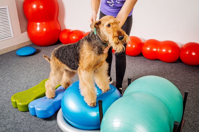Indoor Winter Exercise for Dogs