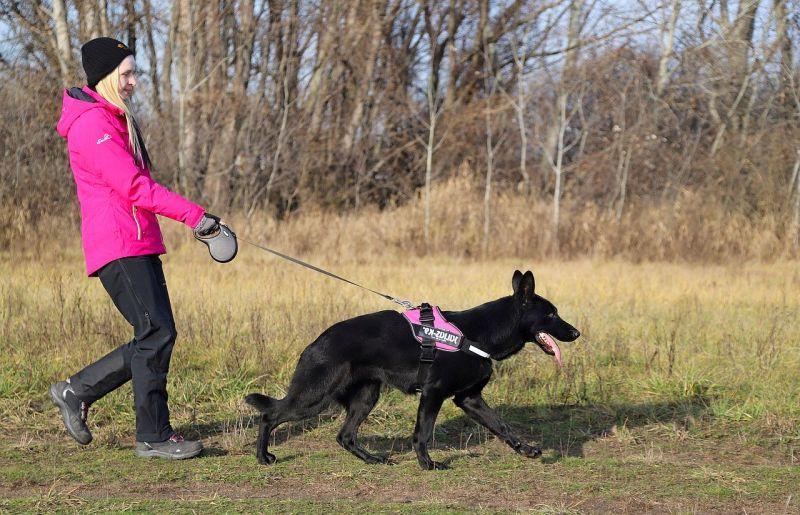dog poop training sprays