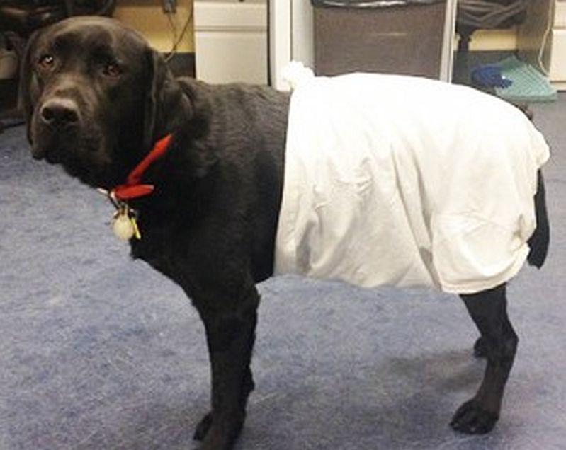 t shirt dog diaper