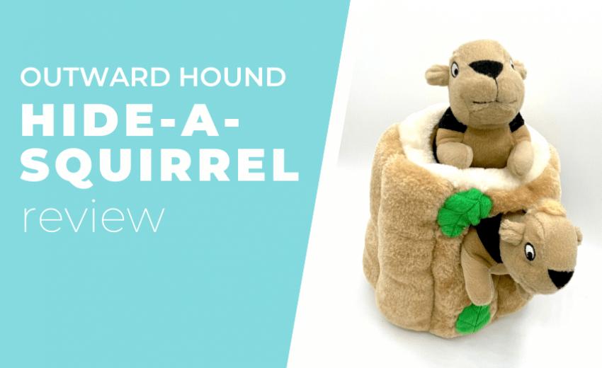 hide-a-squirrel-review