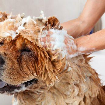 anti-shedding shampoo
