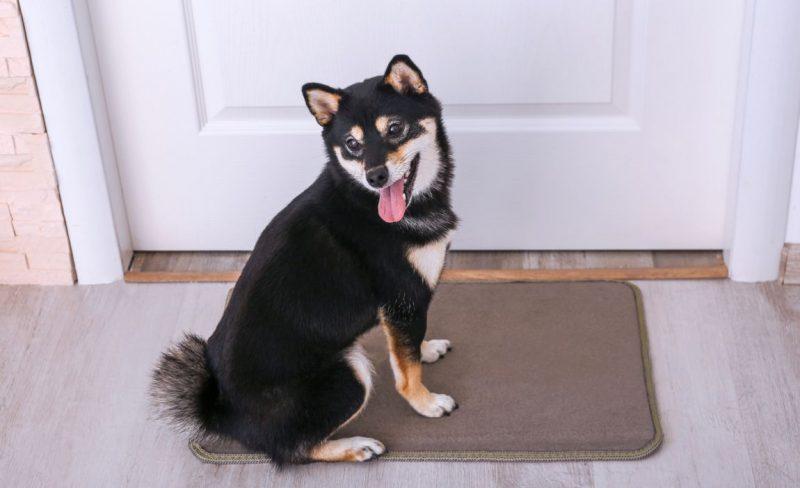 Best Dog Doormats