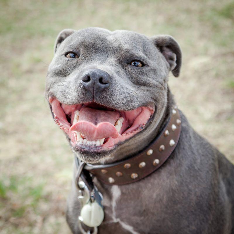 wide dog collar