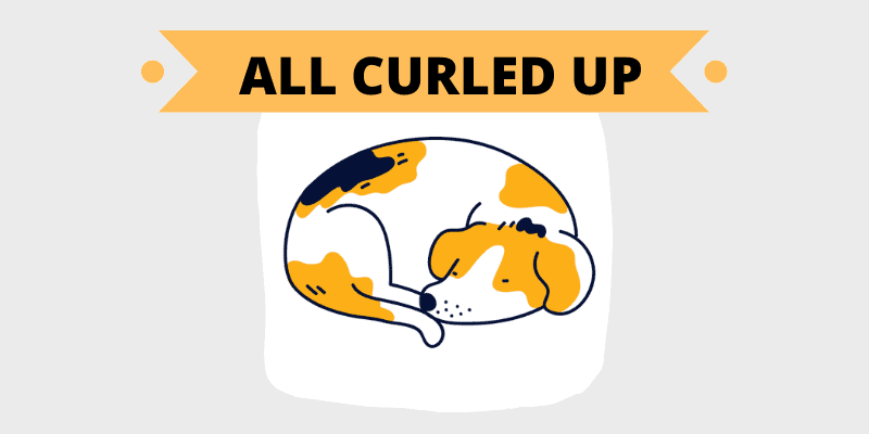 curled up sleep position