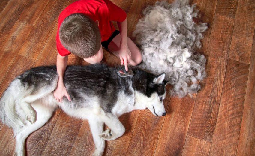 Best Brushes for Huskies
