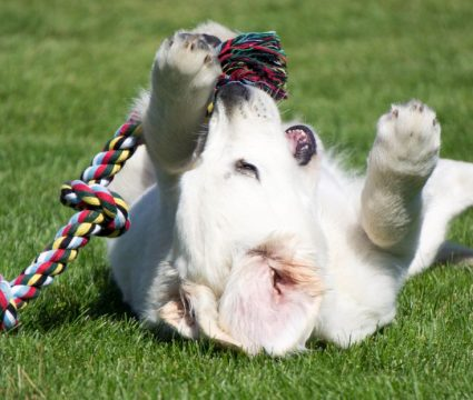 best rope toy for dogs