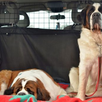 car barrier for dogs
