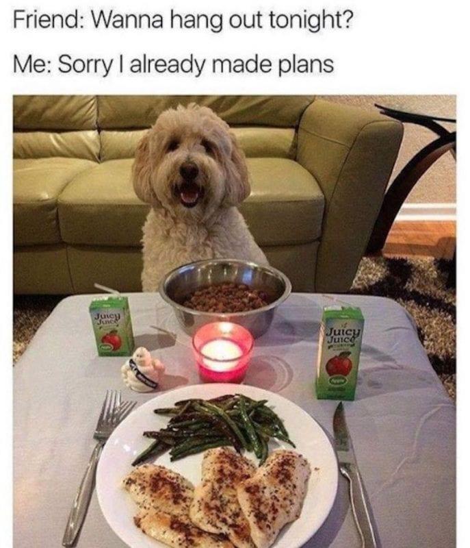 dog introvert meme