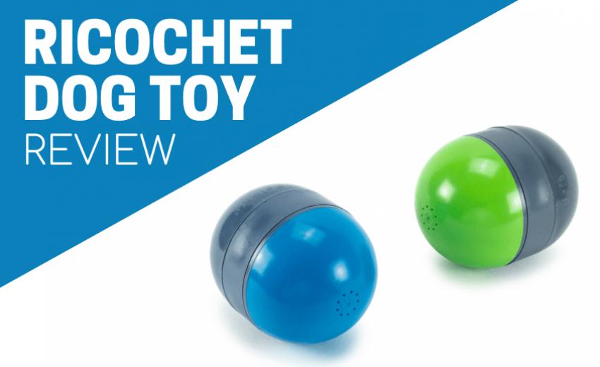 ricochet dog toy